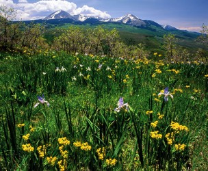 La Sal Mountain Meadow